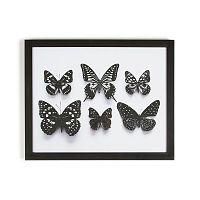 Obraz v ráme Graham&Brown Botanical Butterfly,50×40cm