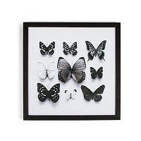 Obraz v ráme Graham&Brown Butterfly Studies,50×50cm
