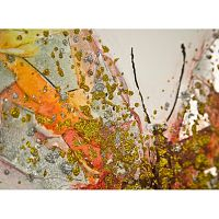 Ručne maľovaný obraz Mauro Ferretti Butterfly, 60×60 cm
